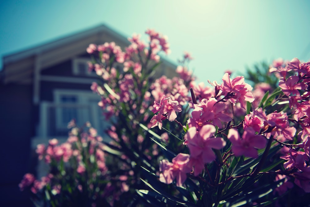 Flowers in front of house with blurred background
